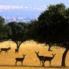 Red natura 2000 celebra su 20 aniversario en cabañeros