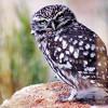 """Club de Caza y Outdoorstocks organizan el """"Concurso de fotografía de naturaleza"""""""