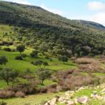 La Consejería de Agricultura establece los requisitos legales de gestión y las buenas condiciones agrarias y medioambientales en aplicación de la condicionalidad