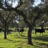 La Consejería de Agricultura avanza en la búsqueda de un Plan Director de la Dehesa consensuado con el sector