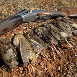 Castilla y León: días hábiles para la caza en media veda 2013