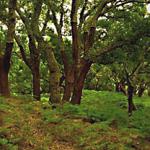 El campo de voluntariado ambiental del Parque Natural Los Alcornocales trabajará en la conservación de esta especie
