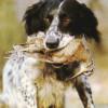 I Exhibición de Perros de Caza en Surcaza 2013