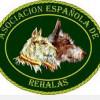 La Asociación Española de Rehalas mejora las condiciones de los seguros de los perros