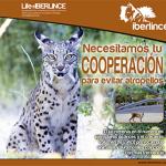 Una campaña pretende concienciar en las carreteras andaluzas para evitar atropellos de fauna