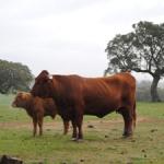 Agricultura destina 3,2 millones para los programas de identificación animal, control y vigilancia de enfermedades animales