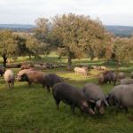 Extremadura: La Consejería de Agricultura suprime la obligación de presentar anualmente los libros de registro de ovino, caprino y porcino para su inspección y visado