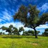 Extremadura: el GobEx subvenciona con hasta 20.000 euros proyectos de conservación de la naturaleza