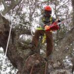 Extremadura - Desarrollo Rural forma a 165 trabajadores agrarios en la poda de encinas en altura