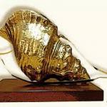 Ciudad Real acogerá la entrega de los premios Caracola de caza