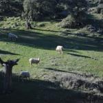 Unos 200 pastores con 112.000 cabezas de ganado participarán este año en el control de pastos dentro del Plan Infoca