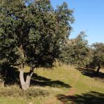 Medio Ambiente organiza unas jornadas sobre la conservación de la biodiversidad en las dehesas