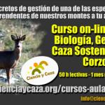Curso on-line sobre 'Biología, gestión y caza sostenible del corzo'