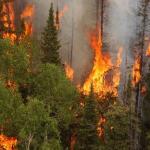 CLM: El Gobierno regional destina un 10 por ciento más que en 2013 al dispositivo de lucha contra incendios