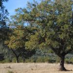 La organización internacional forestal FSC, Kim Carstensen, celebrará su VII Asamblea General en Sevilla
