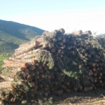 El Gobierno de Extremadura y los ayuntamientos de Las Hurdes trabajarán conjuntamente en el aprovechamiento energético de la madera de los montes públicos