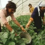 El Ministerio de Agricultura, Alimentación y Medio Ambiente convoca la V edición de los Premios de Excelencia a la Innovación para Mujeres Rurales