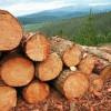 Extremadura: Medio Ambiente destina 2 millones de euros para trabajos forestales de prevención, restauración de áreas degradadas y equipamientos para el Plan Infoex