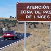 Mejoras en carretera para minimizar los riesgos de atropellos de lince
