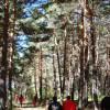 Extremadura: publicada la primera propuesta de resolución provisional para la concesión de ayudas para elaborar instrumentos de gestión forestal con una subvención máxima de más de 1,8 millones de euros