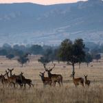 """El IREC aboga por la caza en Cabañeros para que el parque siga """"estable"""""""