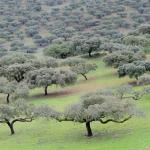 Extremadura: Agricultura aumenta su presupuesto para 2015 casi un 7 por ciento hasta los 1.188 millones de euros, lo que supone un 22,1 por ciento del total