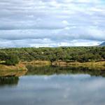 Manual de Gestión de Servicios en Agua Forestal