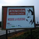 Las carreteras extremeñas cuentan ya con señales de tráfico que advierten de la presencia del lince ibérico