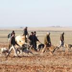 Investigadores del IREC sugieren que la caza puede ser una herramienta de conservación de aves en medios agrícolas