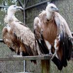 Los Centros de Recuperación de Especies Amenazadas incrementan el número de ingresos con 5.628 ejemplares atendidos
