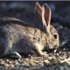 Andalucía: Conejo y zorzal podrán cazarse el 2 de noviembre