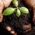 Aprobado el Programa de Desarrollo Rural de Extremadura 2014-2020 por importe de 1.188 millones de euros