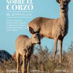 La ACE organiza el IV Simposio sobre el Corzo en la Península Ibérica