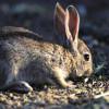 """Fedexcaza pide """"soluciones"""" ante la """"preocupante"""" situación de la caza menor"""