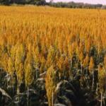 El Ministerio de Agricultura, Alimentación y Medio Ambiente presenta a información pública la Orden de bases de ayudas a explotaciones agrarias para paliar los efectos de la sequía