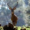 Andalucía: la temporada de caza mayor cierra con un 32% menos de reses abatidas