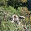 Subasta de especies cinegéticas en la Reserva Regional de Caza de Las Batuecas el día 20