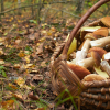 Aragón: La exclusión de caza, pesca y productos del bosque de la venta directa preocupa al mundo rural