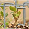 Para su reforestación: arbustos espinosos artificiales desde 5,36 €
