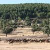 La Reserva de Caza de Cíjara recibe la etiqueta de calidad Wildlife Estates por su valor como coto faunístico