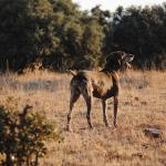 La F.E.C reclama un proyecto de recuperación de la caza menor