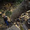 Andalucía produce al año 36.000 toneladas de corcho, el 56% del total nacional