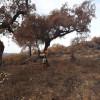 Obras de urgencia en los montes afectados por los incendios de La Granada y Almadén de la Plata