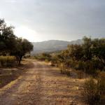 El Gobierno de Castilla-La Mancha va a iniciar el arreglo de 500 kilómetros de caminos rurales en la provincia de Cuenca