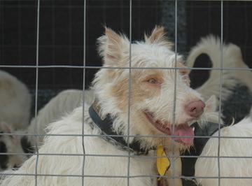 Pienso de caza y rehalas para perros 0 50100 kg - Pienso para perros de caza ...