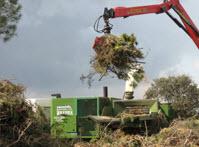 trabajos forestales1