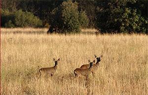 Programa curso de caza
