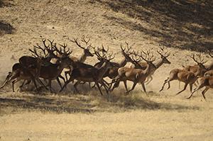 nacional de la caza