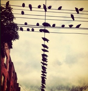 aves amenazadas