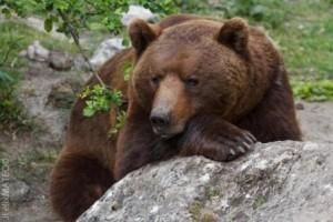 oso HOsquillo
